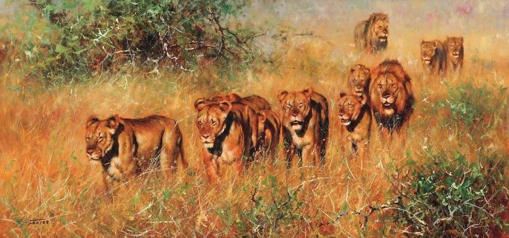 imagenes-paisajes-con-animales-salvajes