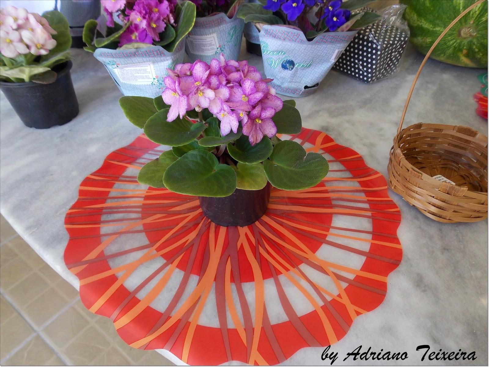 Imagenes De Flores De Violetas - Flores de violetas blancas :: Imágenes y fotos
