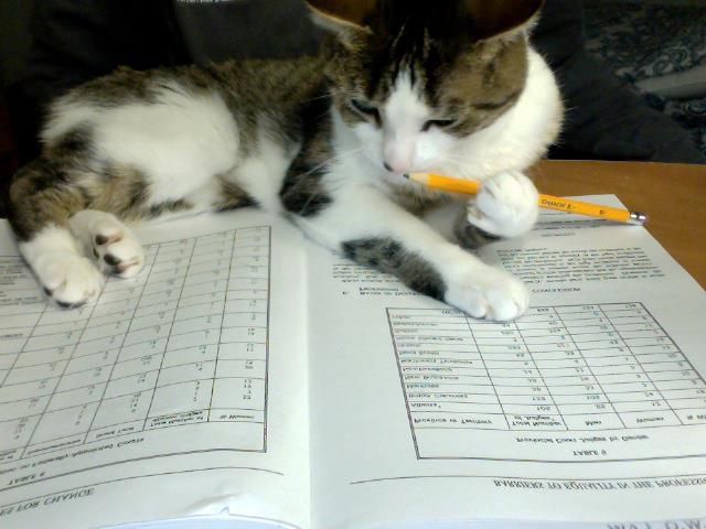 Изучает какую-то науку - прикольные коты 22-11-12