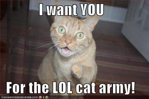 lol cats ignorant