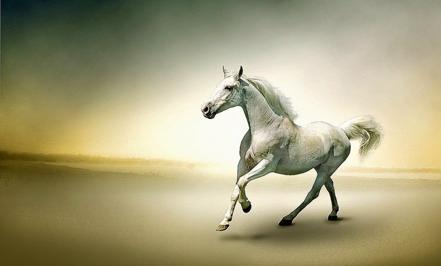 white horse wallpaper beautiful   best hd wallpapers