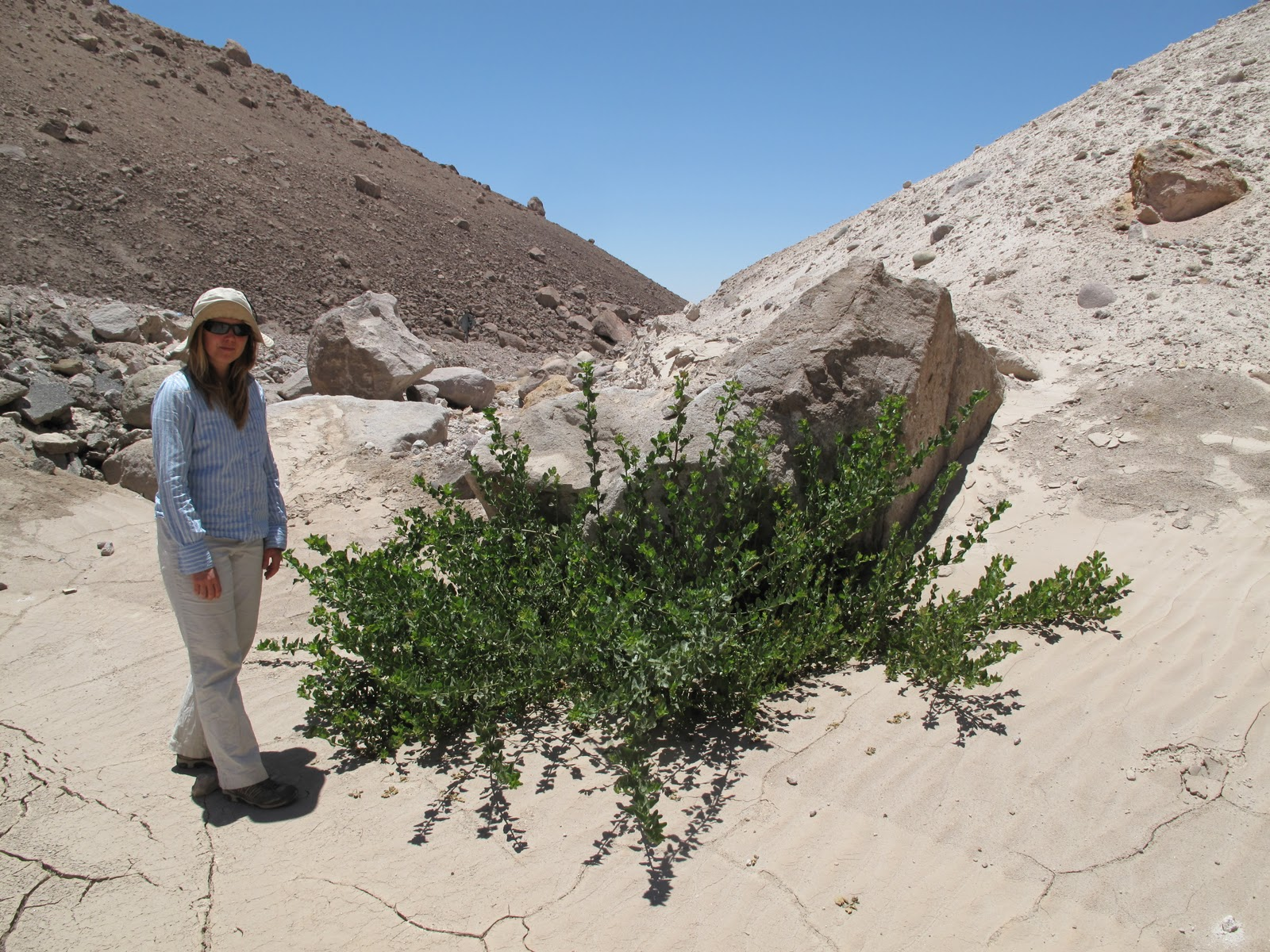 Heavy Hiking: Parinacota / Arica, Chile (NGS Waitt Grant 5)