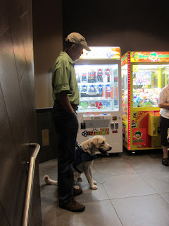 Guide dog puppy in training Jam sitting in front of noisy arcade games.
