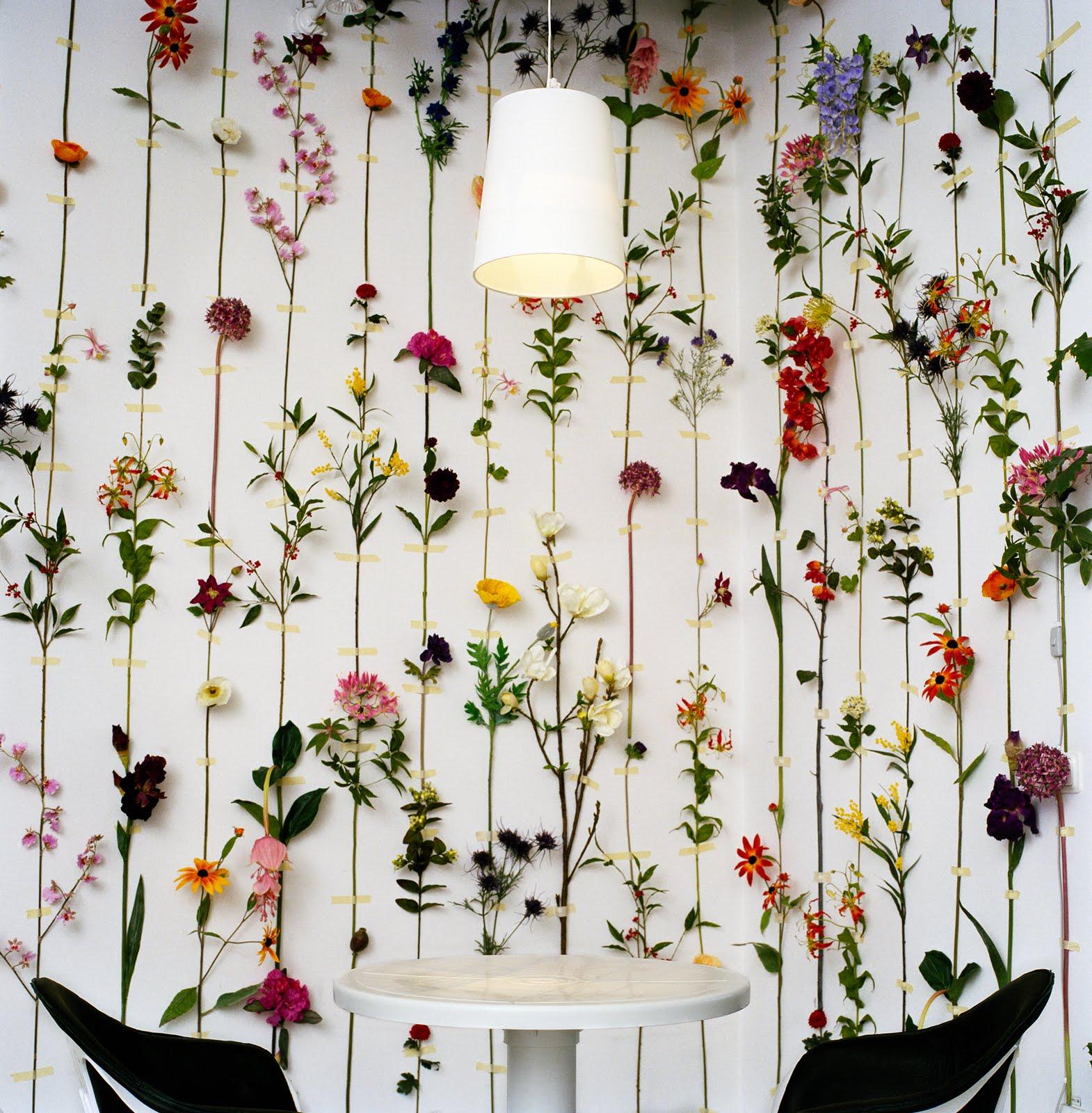 http://4.bp.blogspot.com/-ZMimFOGGkiE/TmSopsRH7vI/AAAAAAAADx0/tp0oJQfbFJM/s1600/Flower-wallpaper.jpg