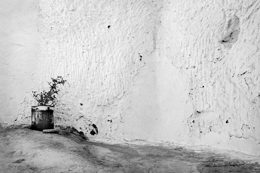 Foto a preto e brando de um muro rugoso e uma lata com uma planta