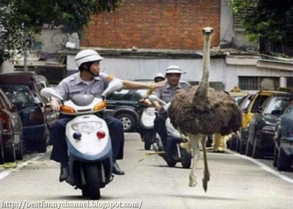 Funny ostrich.