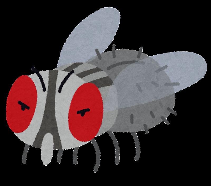 ... キャラクターのイラストです : 魚 イラスト 無料素材 : イラスト