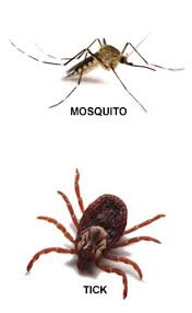 Watch Out for Mosquitoes and Ticks
