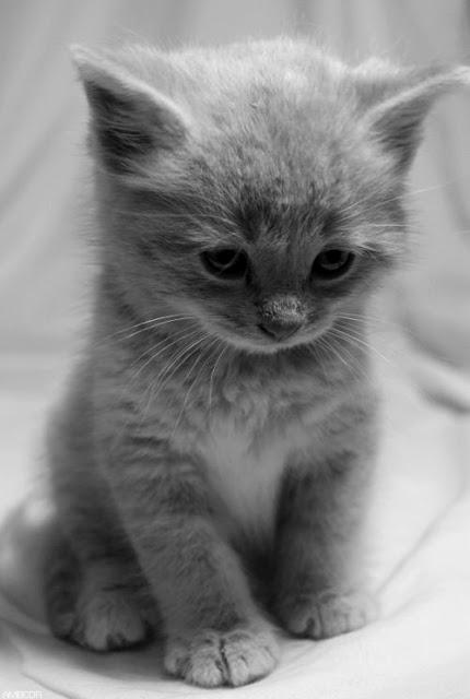 Tiny Adorable Kitten