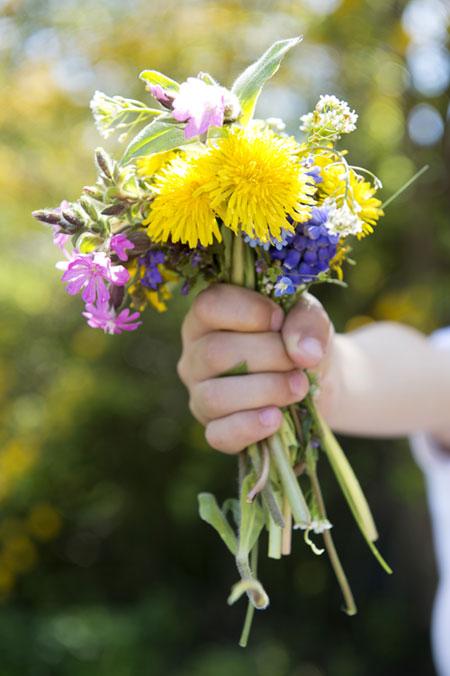 Alpe di Siusi: Un mazzo di fiori