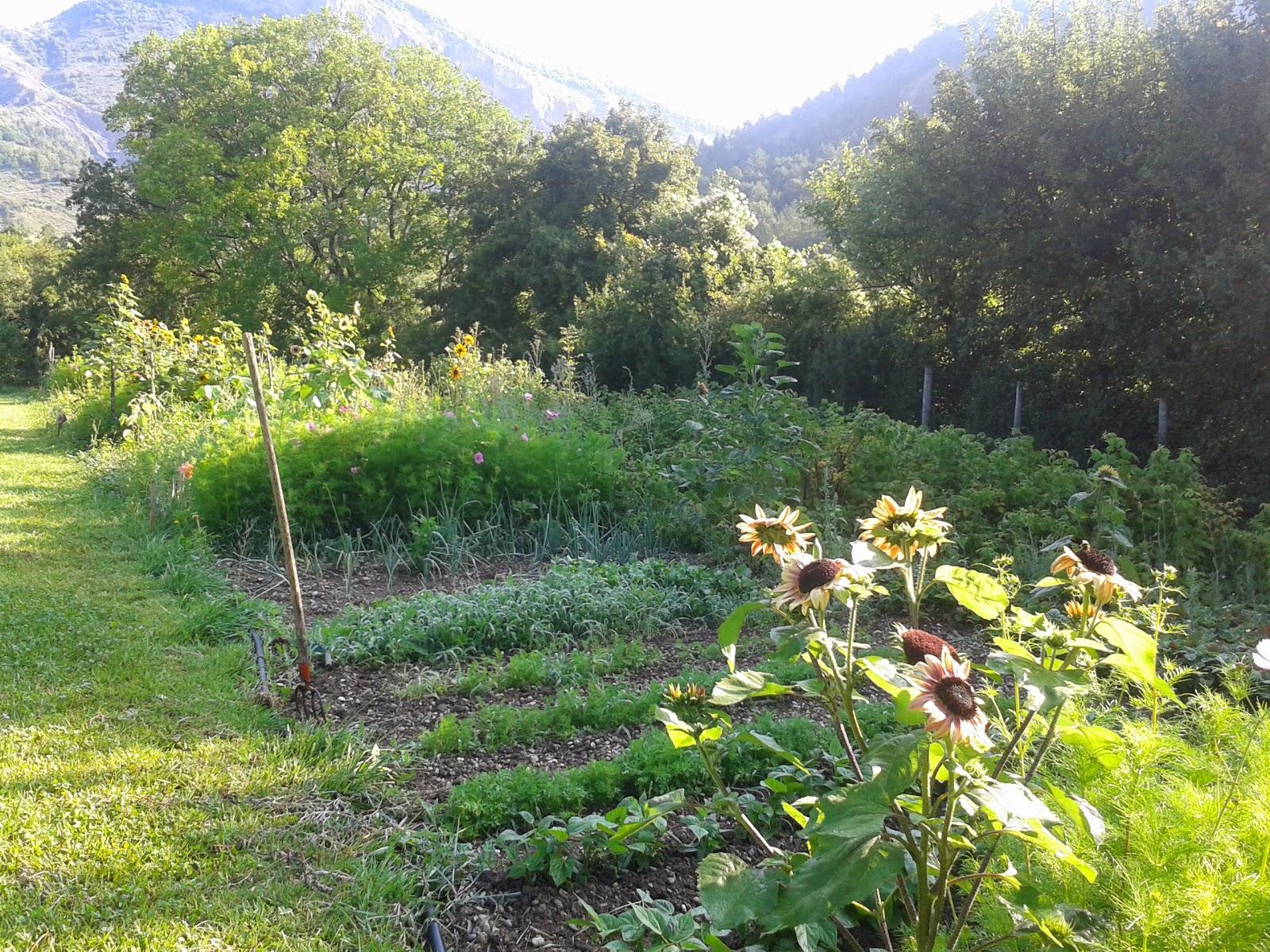 G te le jardin du riou les produits du jardin - Comment congeler les courgettes du jardin ...