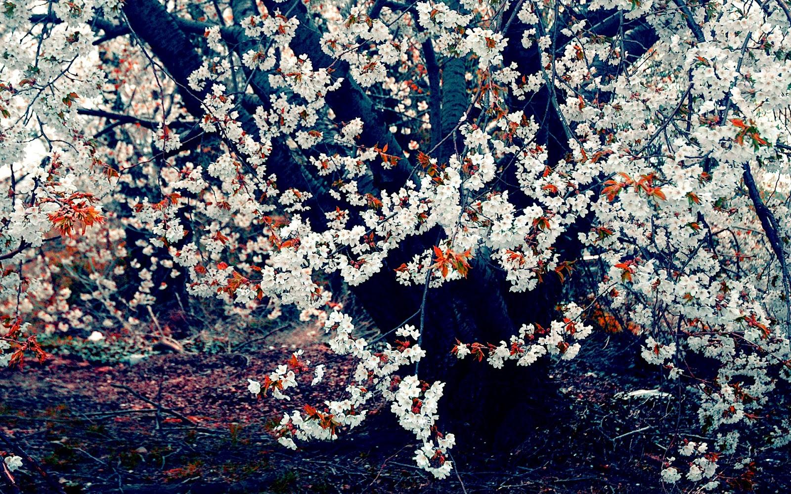 http://4.bp.blogspot.com/-ZNlrkFy5aVA/UFbgcvVbZlI/AAAAAAAAEe0/tUFtTTo8NHk/s1600/01444_autumnleaves_1920x1200.jpg