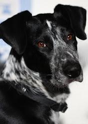 Dżuma - adoptowana ze schroniska w Krotoszynie