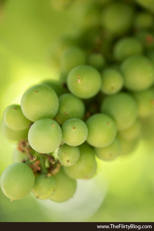 Bright Green, New, Pinot Grapes