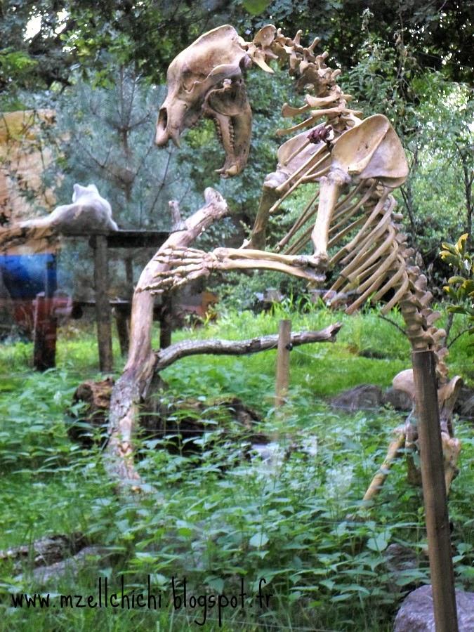 Zoo-Pessac-Loup-Dino