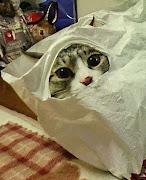 śmieszne zdjęcia koty smieszne zdjecia koty