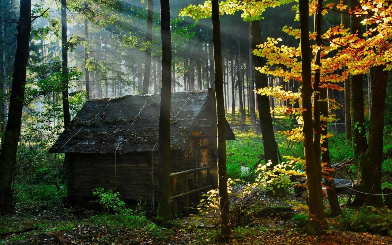 http://4.bp.blogspot.com/-ZO9C1I5XqDc/TtzQ6s0f-oI/AAAAAAAAA4w/-8XLKlEWka8/s1600/forest-hd-11-750403.jpg