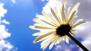 White Flower In Sky HD Wallpaper