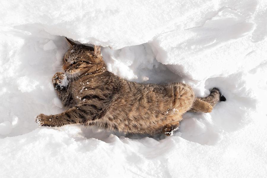 Коты в снегу, фото 3