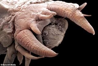 scale+worm2 Raksasa 'Alien' Laut Paling Dalam