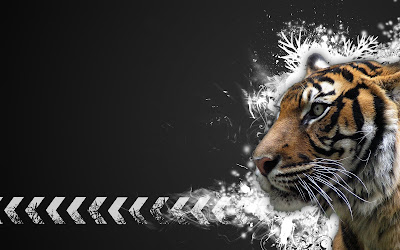 Tiger Widescreen Hd Wallpaper