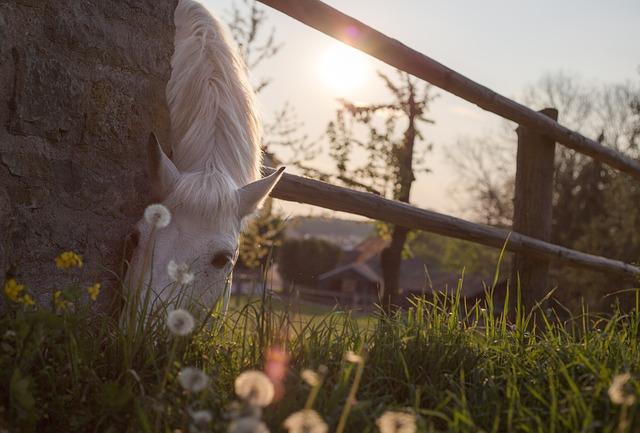 caballo tranquilo después de un tratamiento con células madre