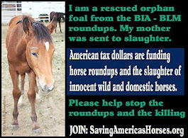 Join: Saving America's Horses