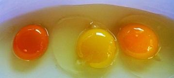 yemas-de-huevo-es-en-realidad-de-una-gallina-saludable