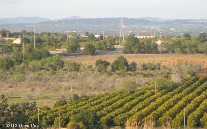 Citrinos, alfarrobeiras e oliveiras
