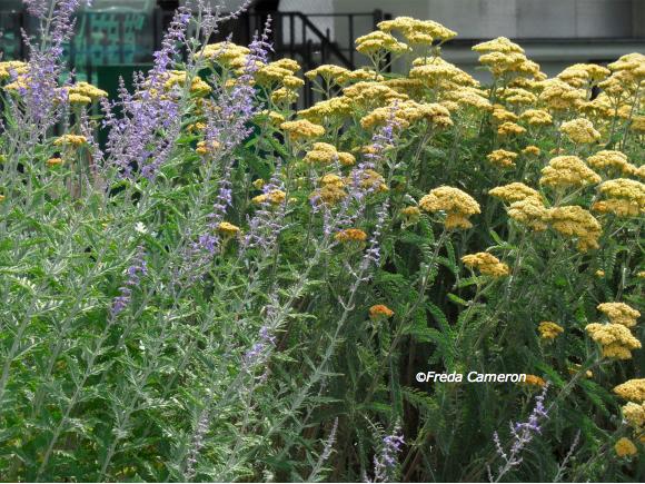 Defining Your Home, Garden and Travel: Oudolf\'s Stellar Perennials ...