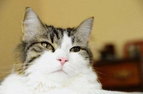 Kucing Ini Dipercaya Bisa Ramalkan Kematian Dengan Akurat