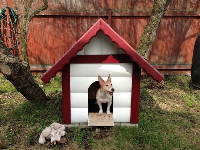 DIY Dog House (12 pics) Crack Two