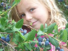 woodall blueberries
