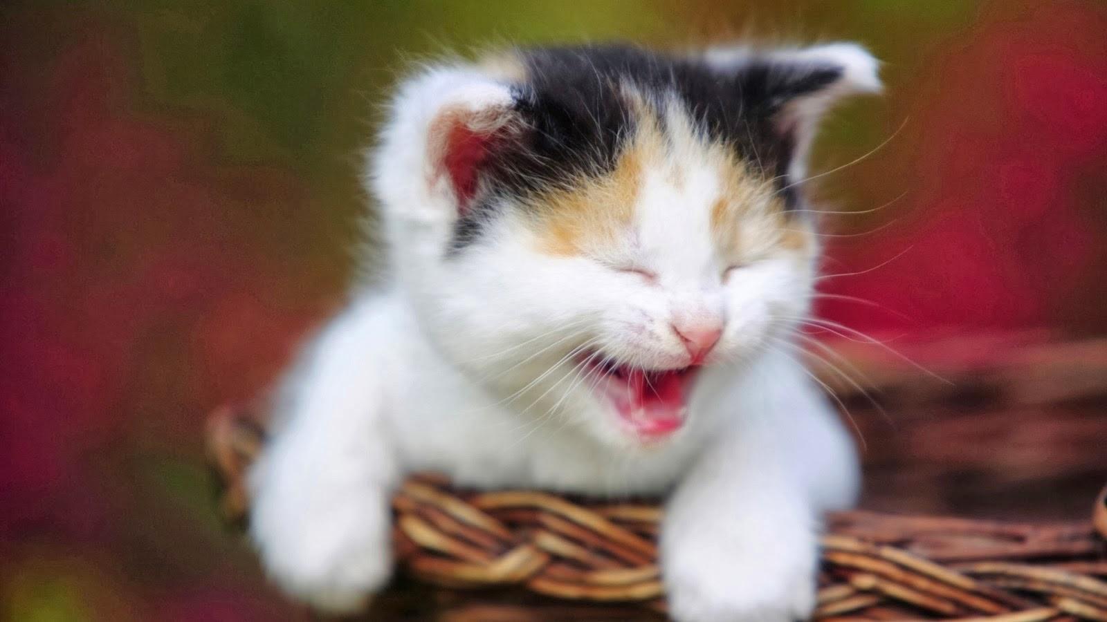 Cute Cats Wallpaper Malino City