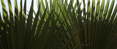 "op art palm ""Arch"", Photograph, Sarah Myers, S. Myers, Ogee, plant, symmetry, green, pattern, fan"