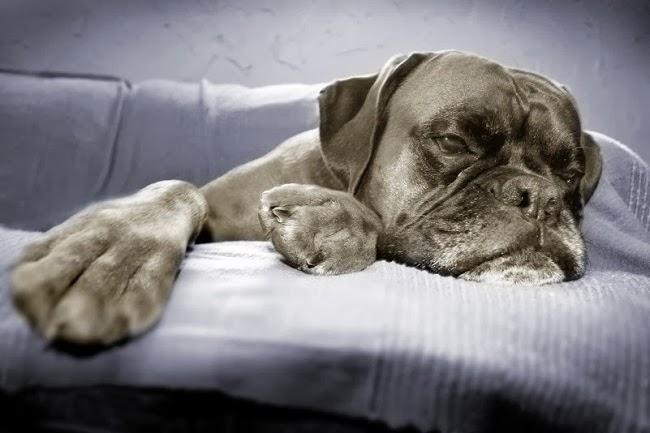Wrzody żołądka i jelit u psów
