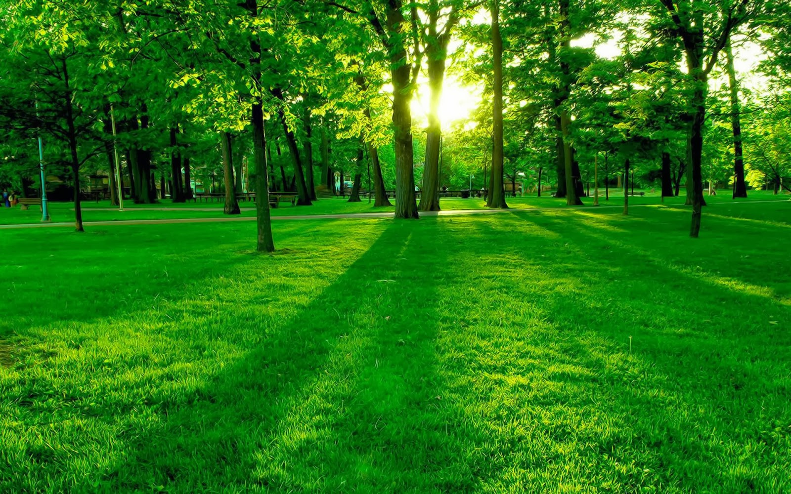 Lush Green Grass Park Nature Widescreen HD Desktop Backgrounds Images Wallpapers