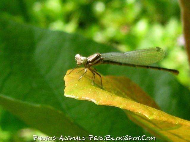 http://4.bp.blogspot.com/-ZR2zshbB3D4/Ttz3lbzopXI/AAAAAAAACfI/P0m23ROakRU/s1600/Image%2Bdragonfly%2B.jpg