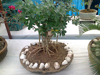 bonsai plantation course ahmedabad