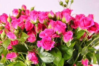 Felicitari flori
