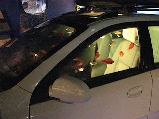 Beautiful-Car-Aquarium-Photos-Images-Gallery