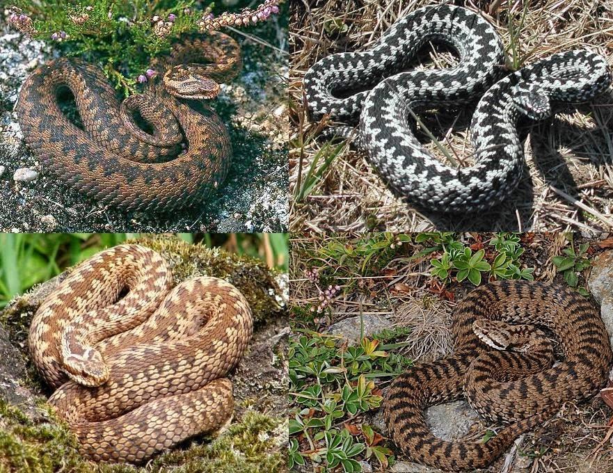 Serpenti di tutto e di pi aprile 2014 for Veleno per serpenti