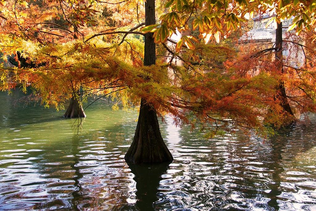 sesión fotográfica El Retiro Madrid estanque palacio de cristal