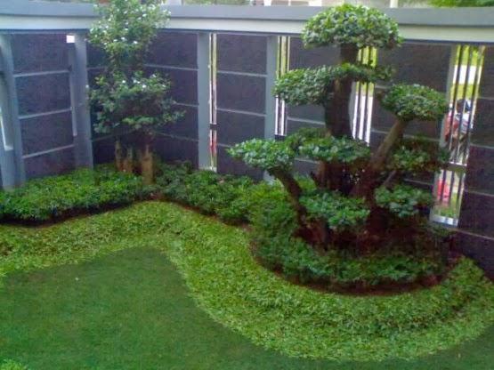 desain taman di halaman belakang rumah minimalis desain