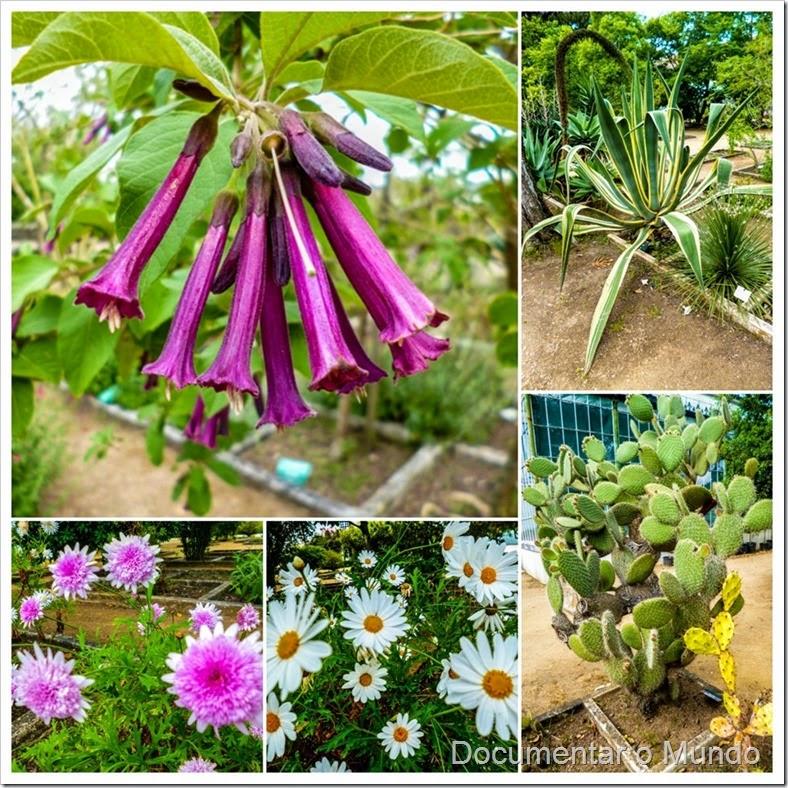 Espécies de Plantas; Jardim Botânico da Ajuda; Ajuda; Lisboa
