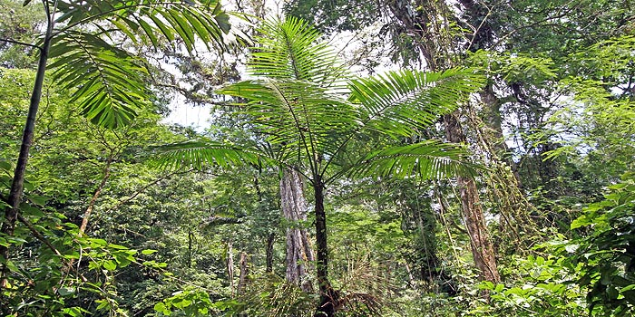 World visits tropical rainforests green plants on the earth for Forest floor definition