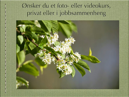 FOTO - / FILMKURS