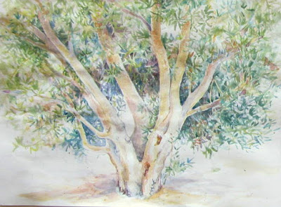 Olive tree Egypt watercolour sketch, Shevaun Doherty