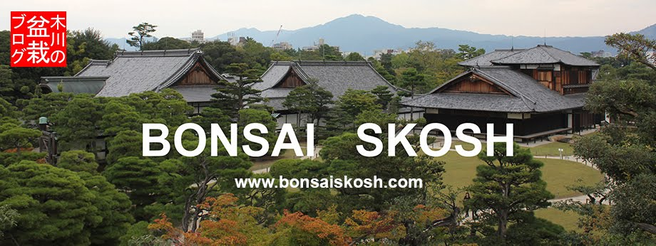 Bonsai Skosh