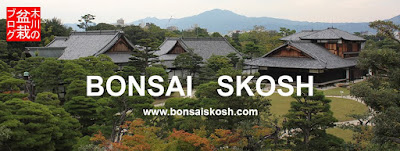 Bonsai Skosh